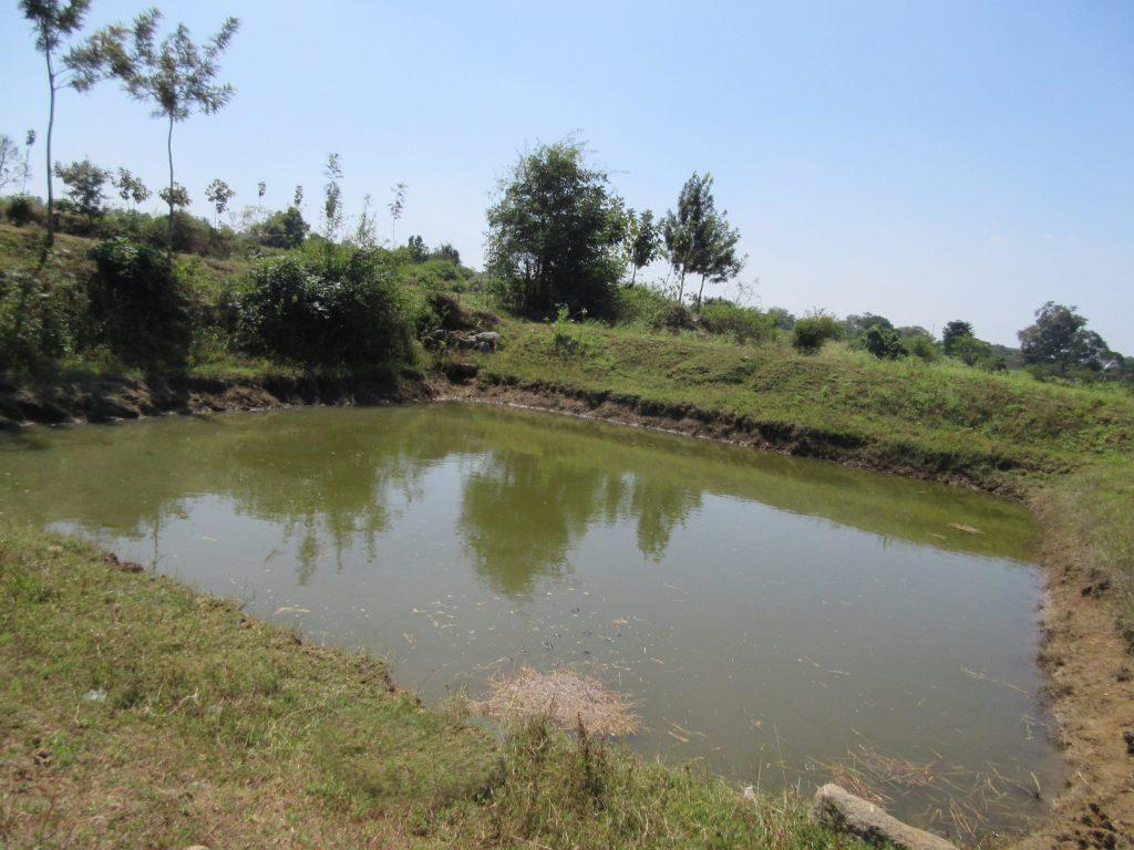 A fish pond in the community near CMC Vellore